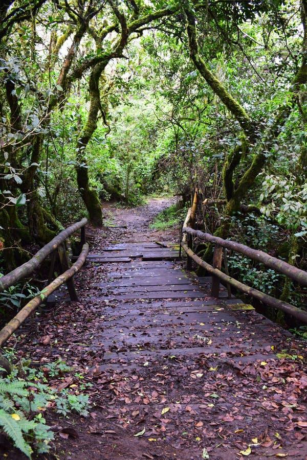 Путь в чаще леса стоковые изображения rf