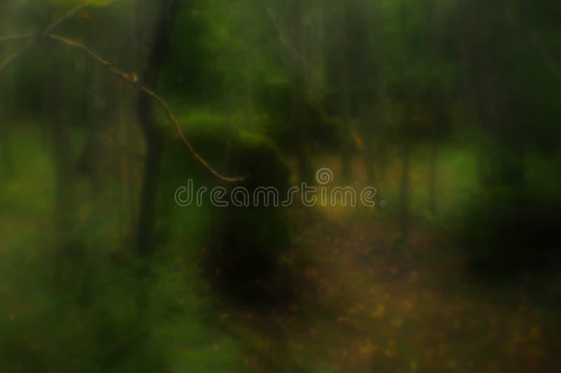Путь глубоко в загадочный лес стоковая фотография