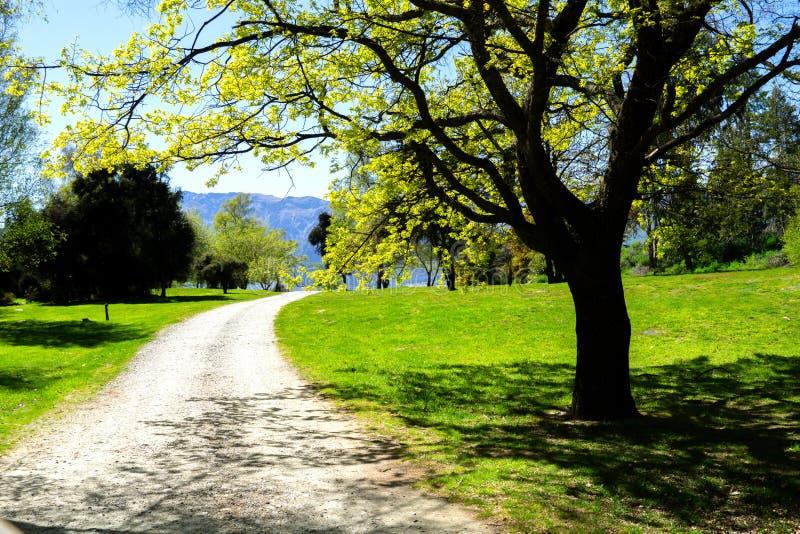 Путь гравия между деревьями вдоль бортового озера Hawea стоковая фотография