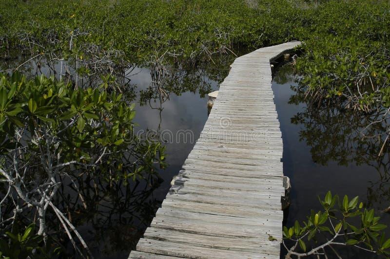 путь деревянный Стоковые Фото