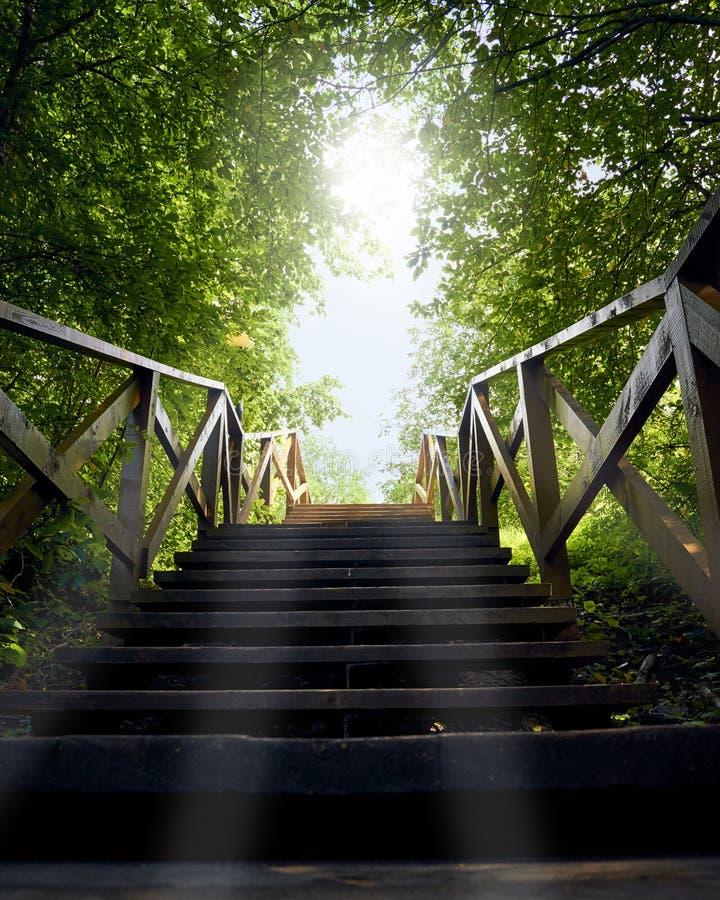 Путь, дорога от темноты, который нужно осветить, голубое небо, деревянная лестница среди деревьев, лето стоковое фото