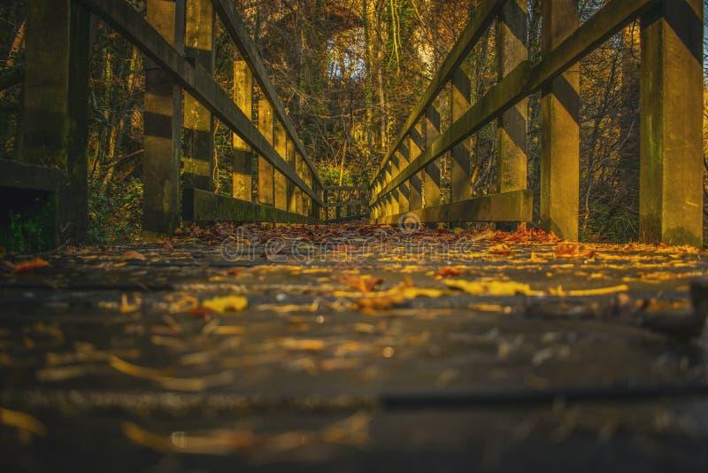 Путь дорожки через лес в падении ландшафта осени стоковые фотографии rf