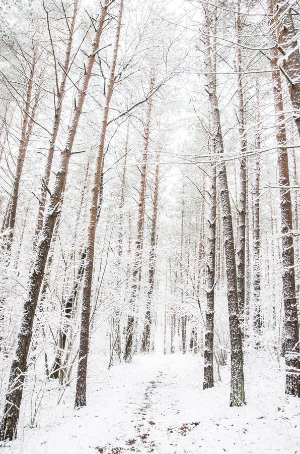 Путь леса в зиме стоковая фотография rf
