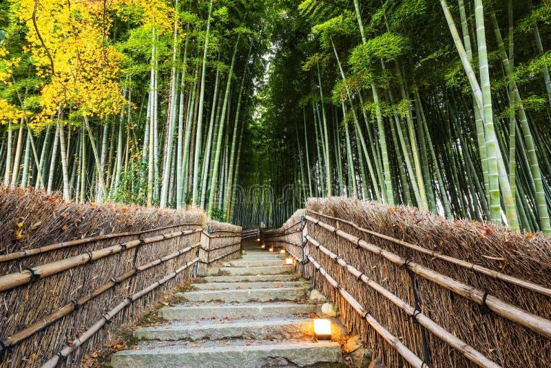 Путь леса Arashiyama бамбуковый, Киото стоковые фотографии rf