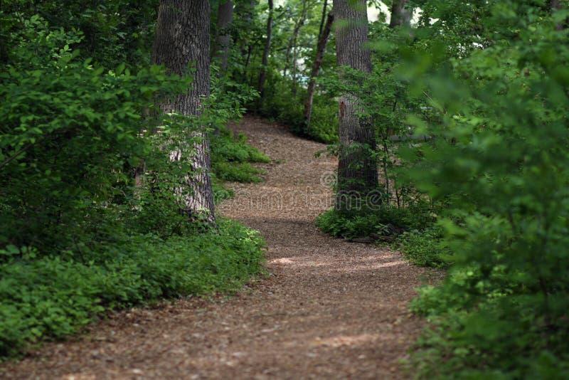 путь лесистый стоковая фотография rf