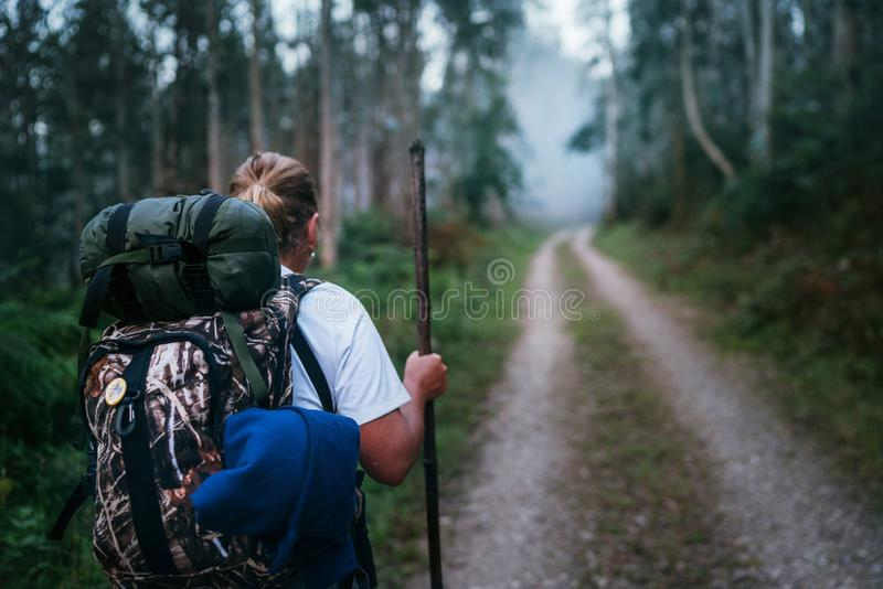 Путь женщины backpacker паломника St James идя путем через всход изображения взгляда леса эвкалипта задний стоковые изображения