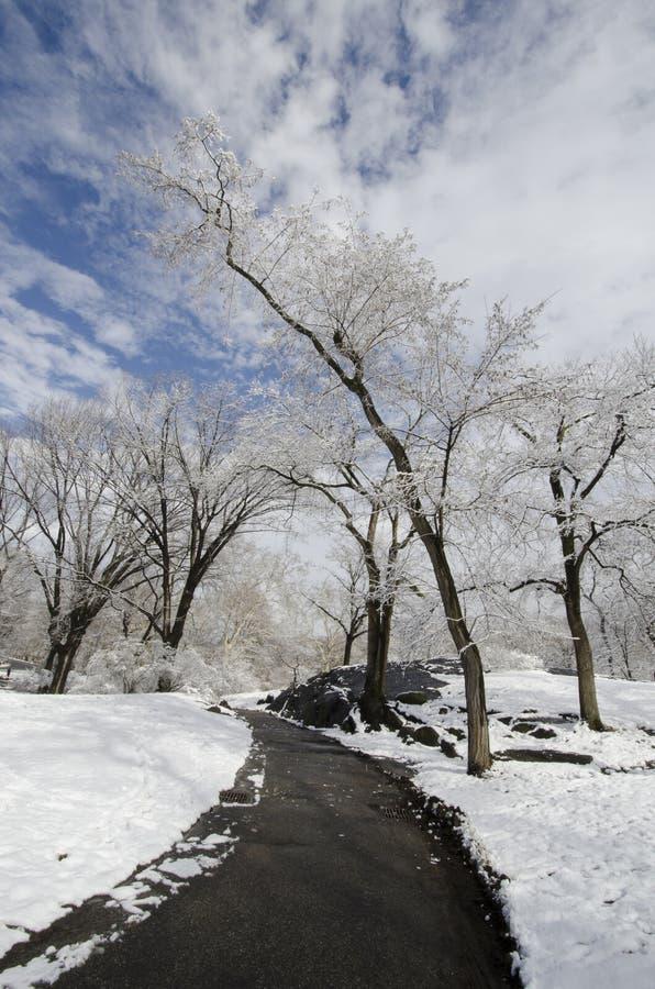 Путь зимы в Central Park стоковые изображения