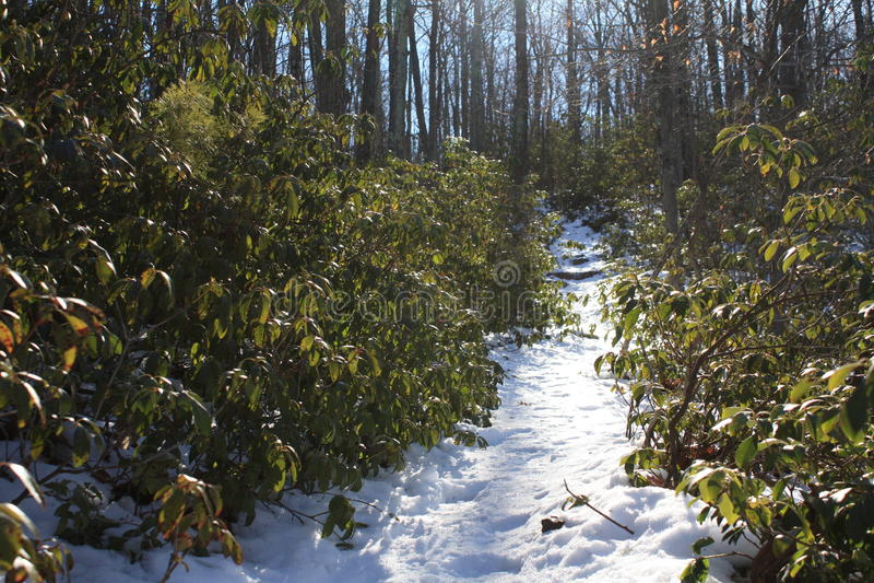 Путь зимы стоковые фотографии rf