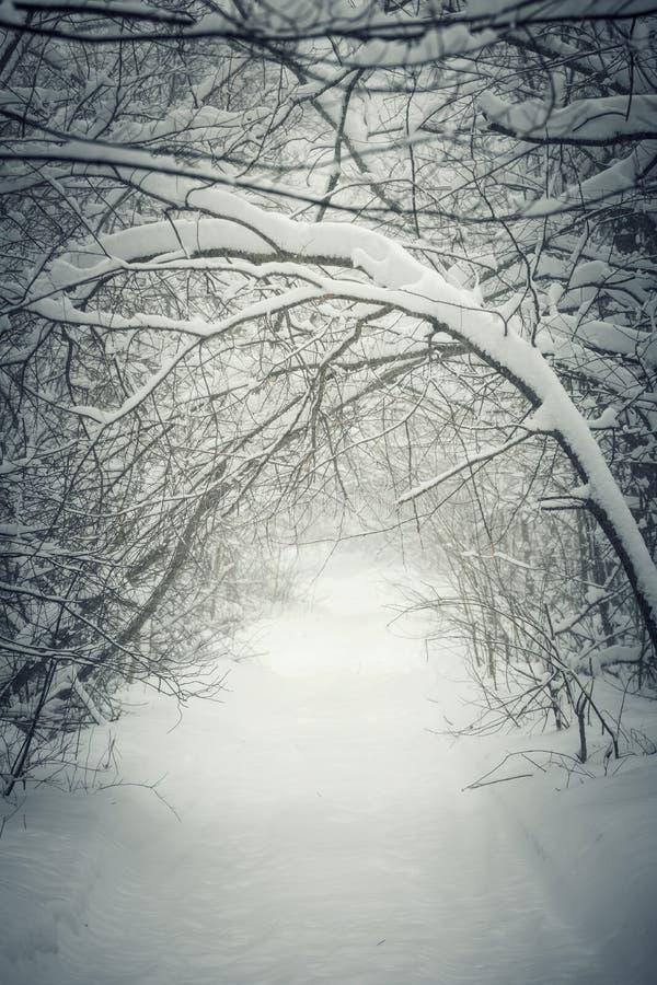 Путь зимы Snowy в лесе стоковые изображения rf