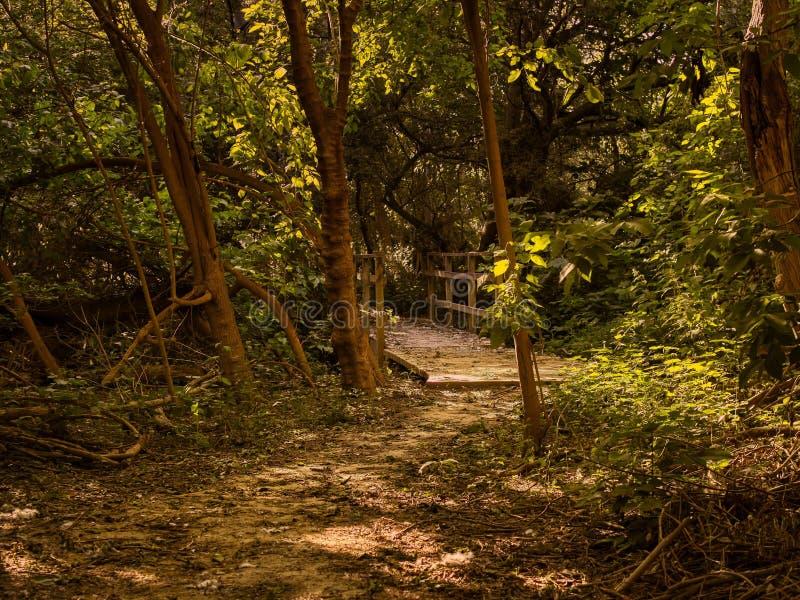 Путь и деревянный мост в лесу на закате стоковое фото