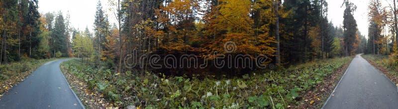 Путь и древесины стоковое фото