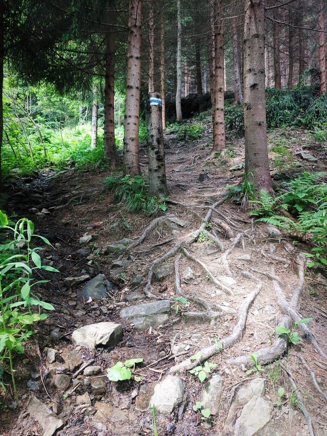 Путь корней горы стоковая фотография