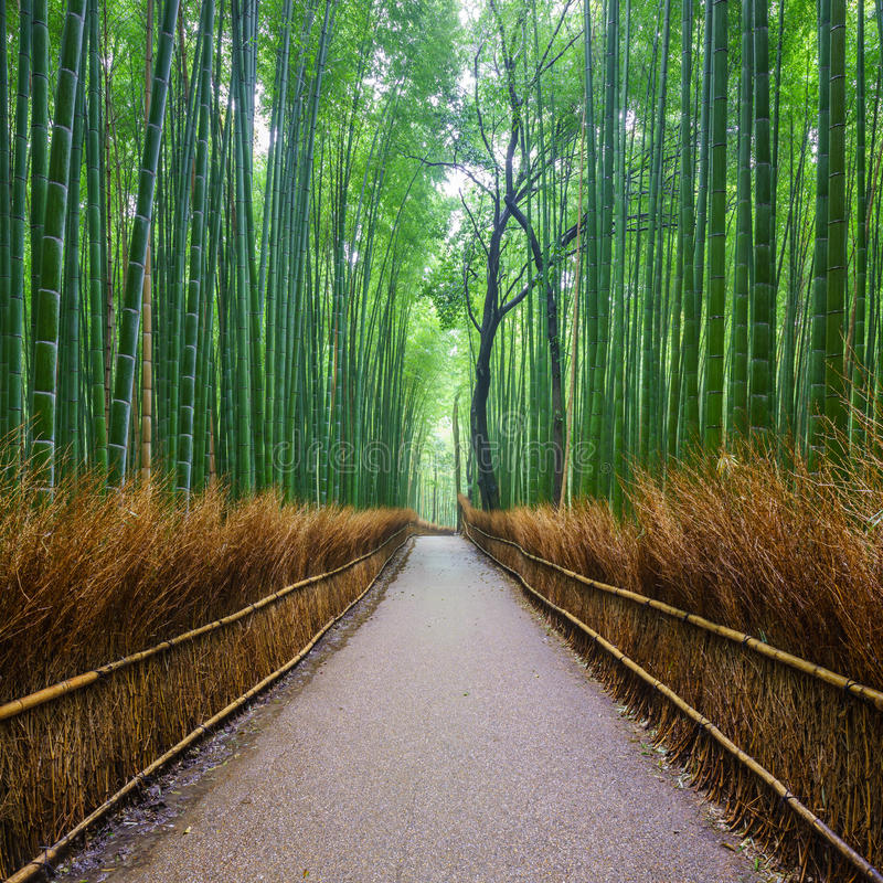 Путь к бамбуковому лесу, Киото, Японии стоковая фотография