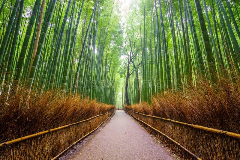 Путь к бамбуковому лесу, Arashiyama, Киото, Японии стоковые изображения