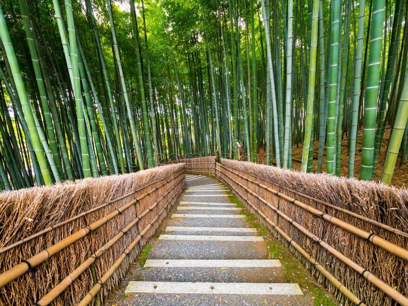Путь к бамбуковому лесу, Arashiyama, Киото, Японии стоковые фото