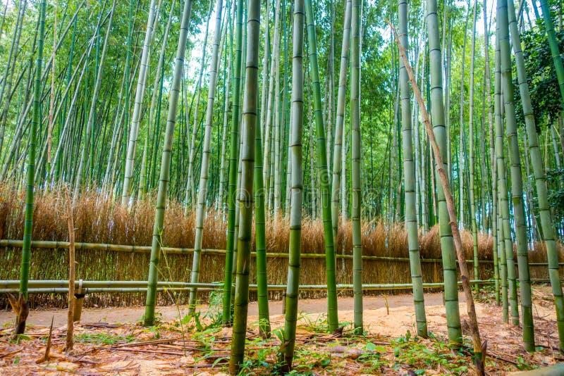 Путь к бамбуковому лесу, Arashiyama, Киото, Японии стоковое изображение rf
