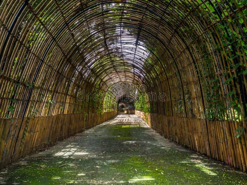 Путь к бамбуковому лесу, Чиангмаю, Таиланду стоковое изображение
