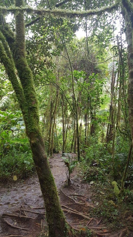путь к водопаду стоковое изображение