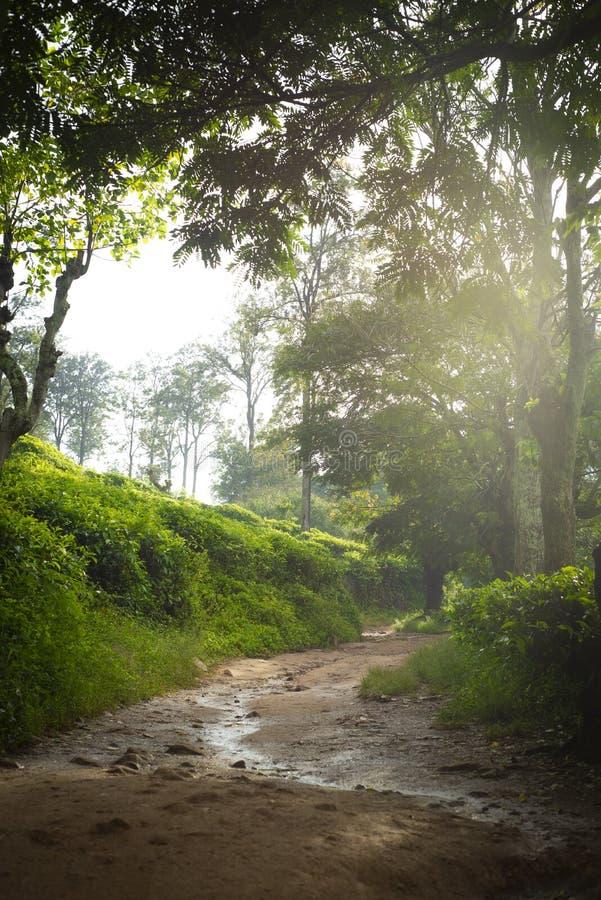 Путь к пику маленького Адама Ландшафт в Шри-Ланка, пик Элла горы маленького Адама, Шри-Ланка стоковые фотографии rf