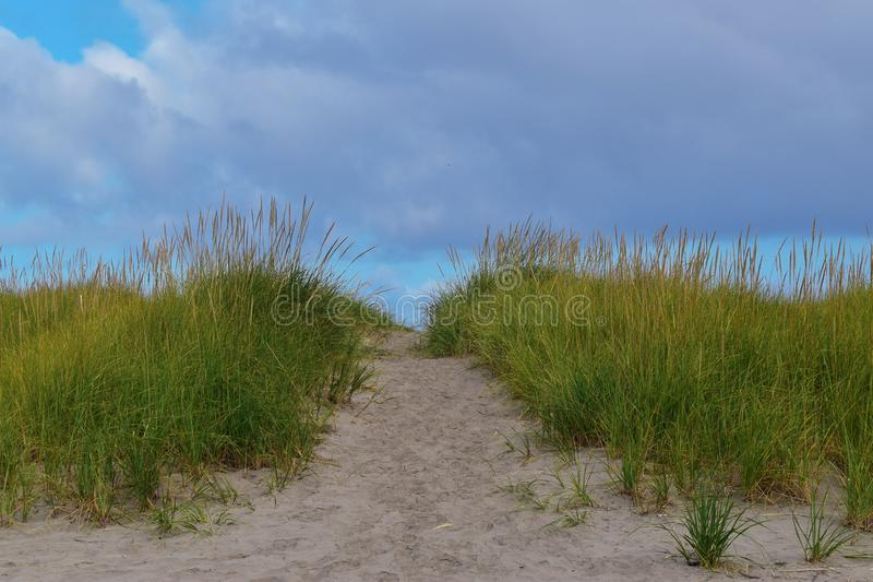 Путь к пляжу с травой стоковые фотографии rf