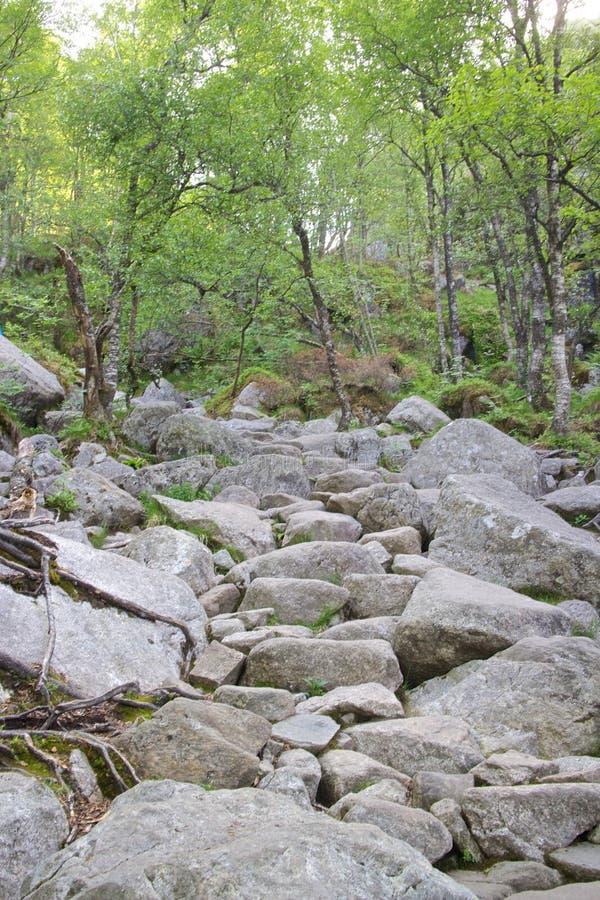 Путь к Preikestolen 013 стоковое изображение rf