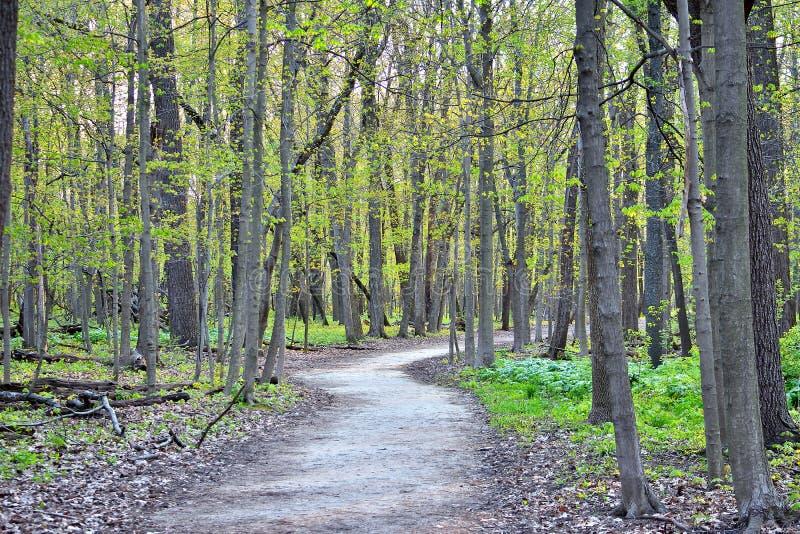 Путь леса времени весны в горе стоковые фото