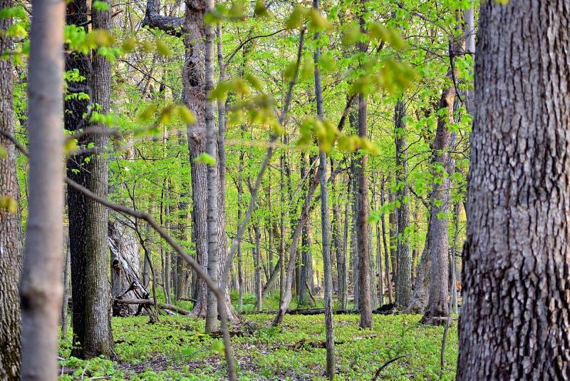 Путь леса времени весны в горе стоковое фото