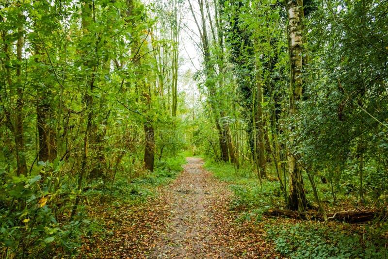 Путь леса в beusebos Нидерланд стоковое изображение rf