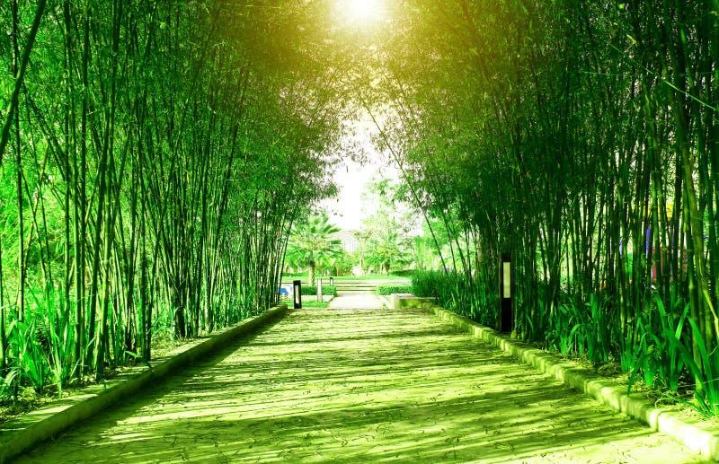 Путь леса и прогулки зеленого цвета тоннеля бамбуковый в общественном парке стоковое фото rf