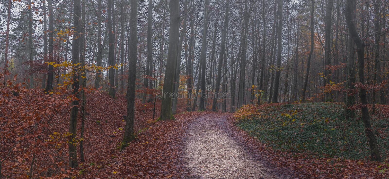 Путь леса осени панорамы с туманом стоковые фото