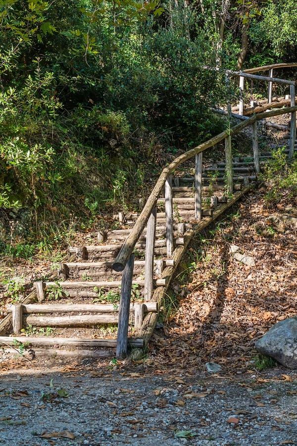 Путь леса с деревянными лестницами стоковое фото rf