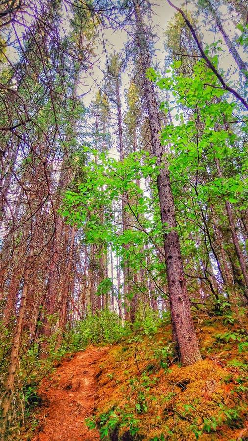 Путь леса 01 стоковые изображения rf