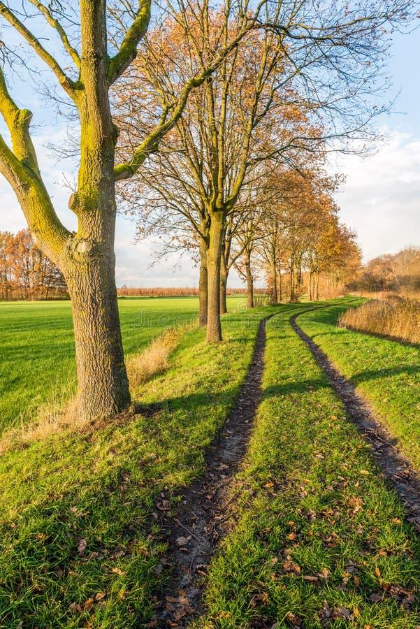 Путь между строкой деревьев и пожелтетыми камышовыми заводами стоковое фото rf