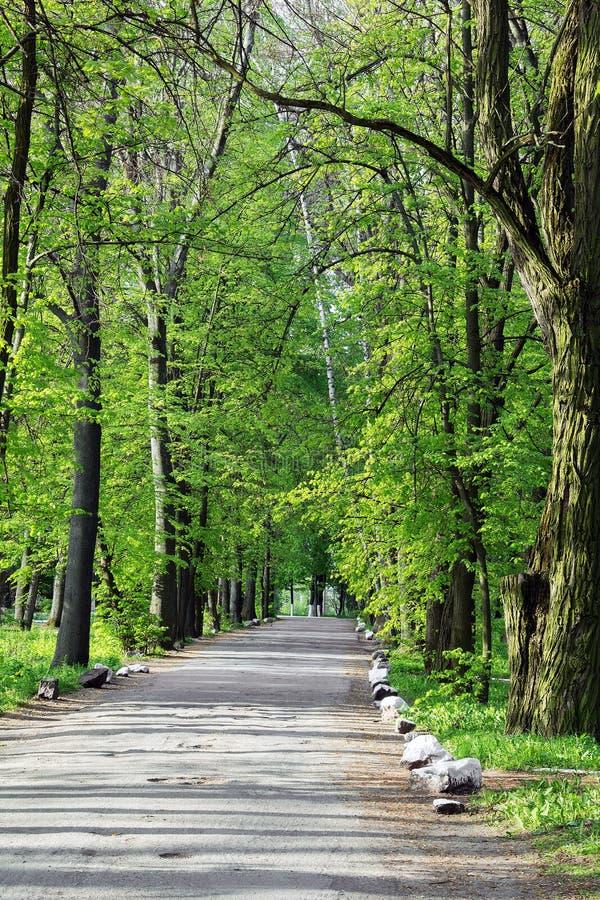 Путь на дороге асфальта через зеленый лес стоковое изображение rf