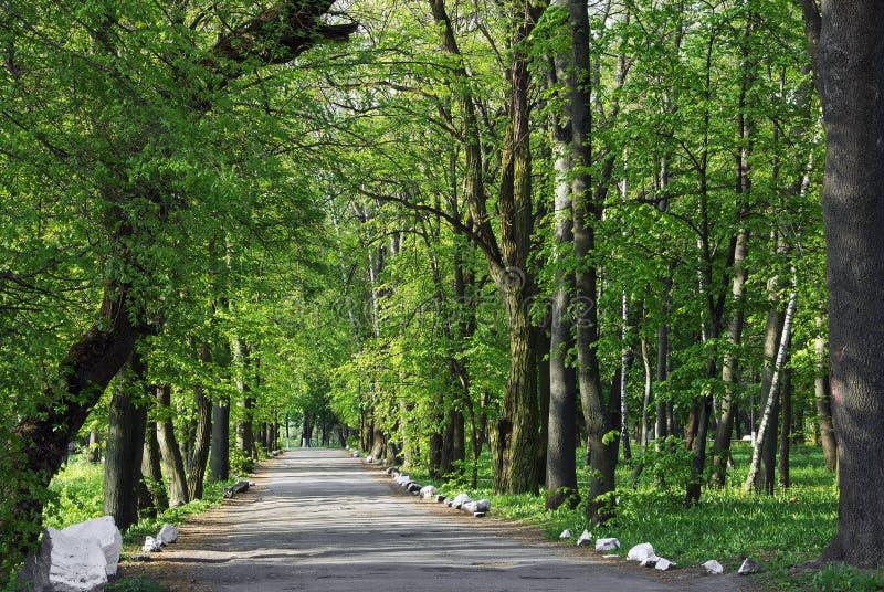Путь на дороге асфальта через древесную зелень стоковые фото