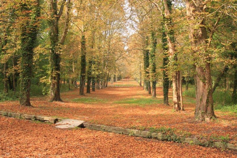 Путь осени через пущу Стоковое Изображение