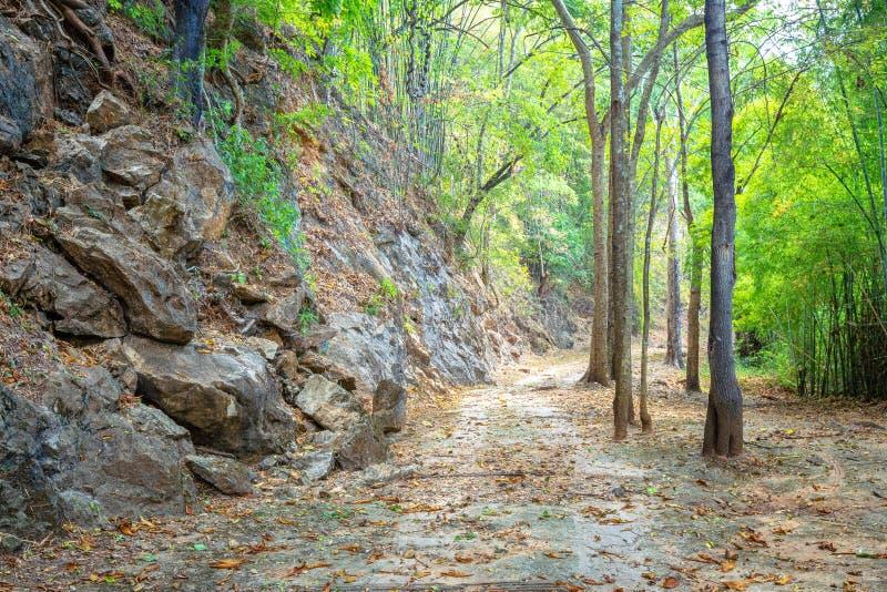 Путь до конца проходит зеленый лес стоковые изображения rf
