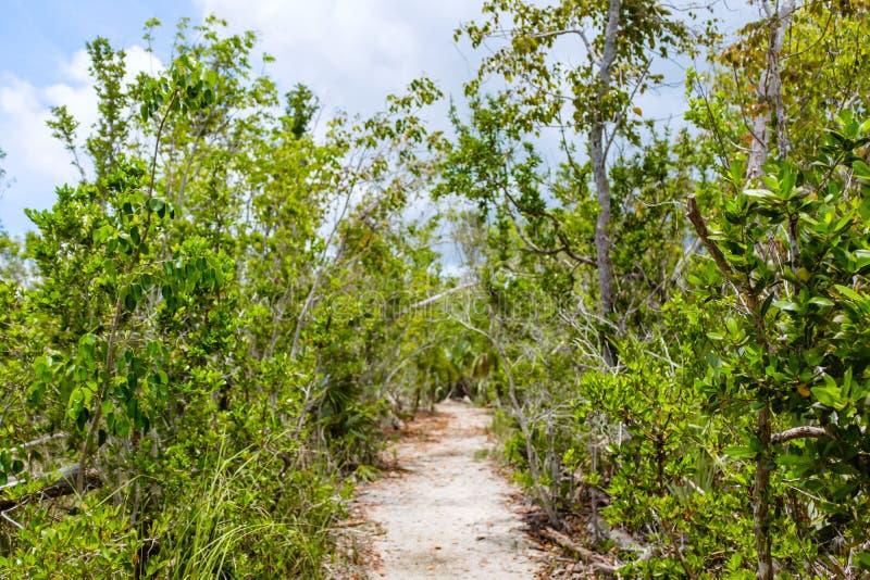 Путь песка в тропическом лесе стоковое изображение