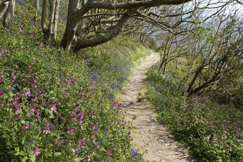 Путь побережья Гернси около мраморного залива с цветками весны. стоковые фото