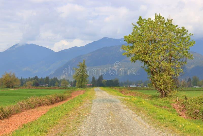 Путь природы через аграрное сельскохозяйственное угодье стоковая фотография rf
