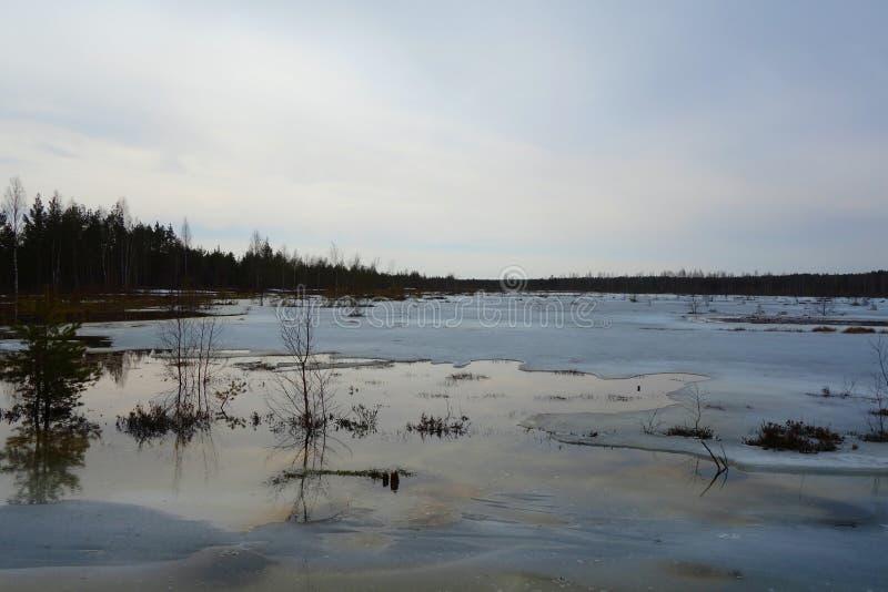 Путь променада через область заболоченных мест в предыдущей весне Променад в следе природы трясины Viru эстония Променад трясины  стоковое фото rf
