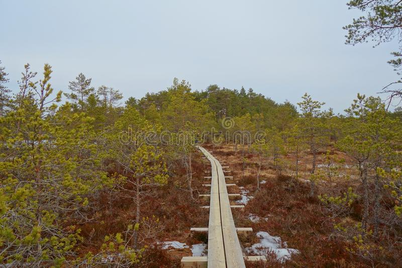 Путь променада через область заболоченных мест в предыдущей весне Променад в следе природы трясины Viru эстония Променад трясины  стоковые фотографии rf