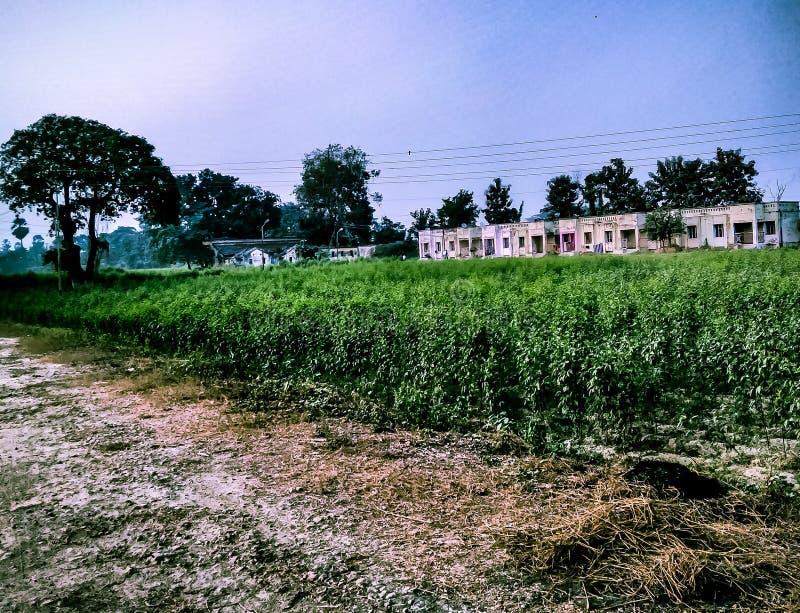 Путь пыли вместе с аграрным полем, residencial домами стоковые изображения rf