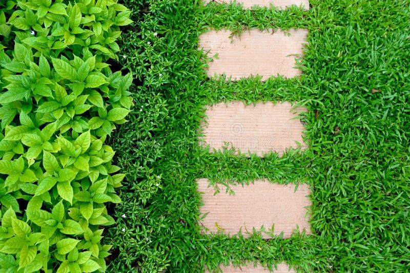 Путь работы травы стоковое изображение