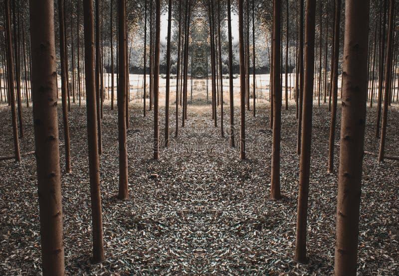 Путь симметричных деревьев стоковая фотография