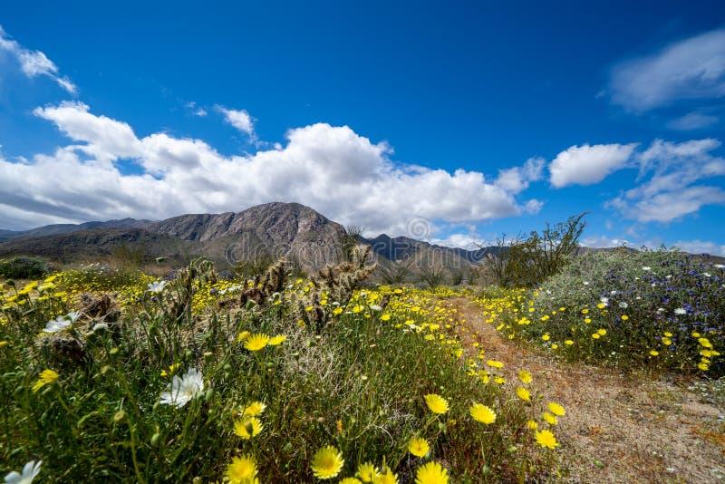 Путь следа грязи идя в парке штата пустыни Anza Borrego во время цветеня весны 2019 супер в Калифорния стоковые изображения