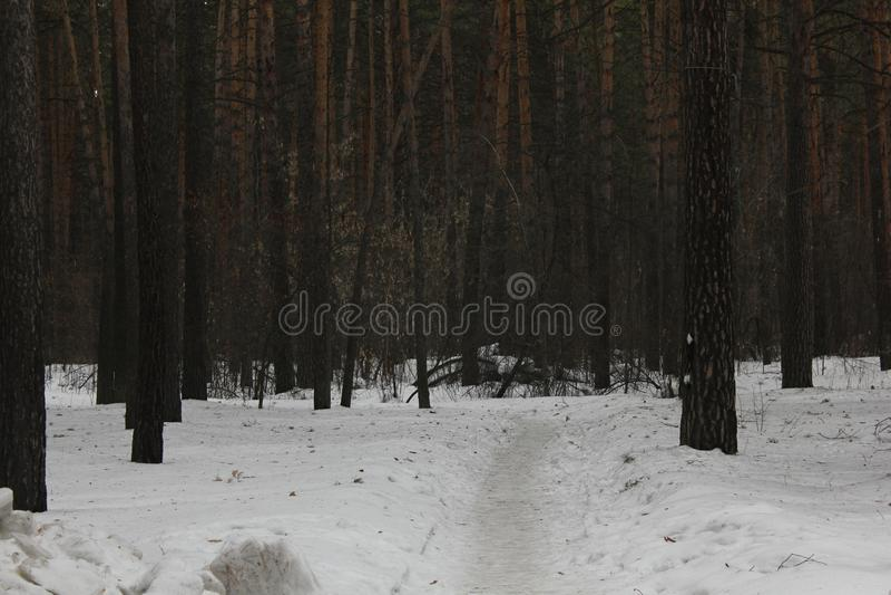 Путь снега в лесе 30547 зимы стоковое фото rf