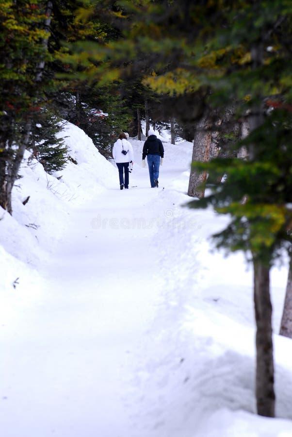 путь снежный стоковое фото