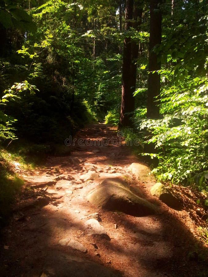 Путь среди деревьев стоковое изображение rf