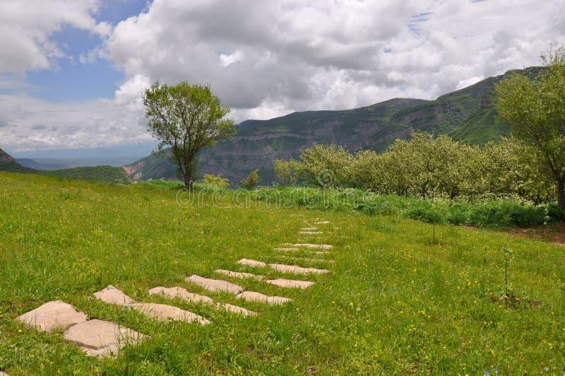 путь травы стоковые изображения
